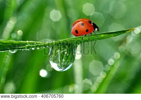 Fresh Morning Dew Decorated With Butterflies And Ladybugs In Green Bagrounds. Fresh Morning Dew Deco