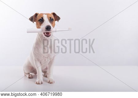Jack Russell Terrier Dog Holds An Electric Toothbrush In His Mouth On A White Background. Oral Hygie