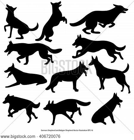 Set Of Silhouettes Of German And Belgian Shepherd Dogs On White Background. Vector Eps 10