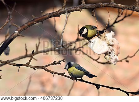 The Great Tit And Blue Tit Feed On Lard In The Garden In Winter.