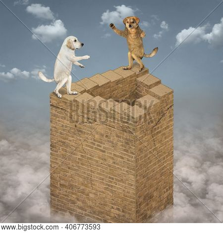 Two Dogs Climb Up The Endless Stairs Of A High Brick Tower That Rises Above The Clouds.