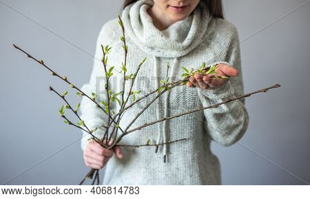 A Woman In A Sweater Is Holding A Bouquet Of Branches With Young Fresh Green Leaves. Concept Of Appr