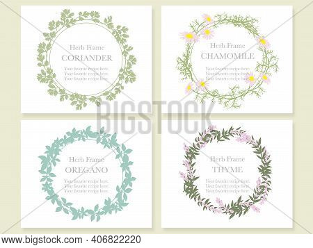 A Set Of Four Frames With Various Herbs: Coriander, Chamomile, Oregano, And Thyme. Vector Illustrati