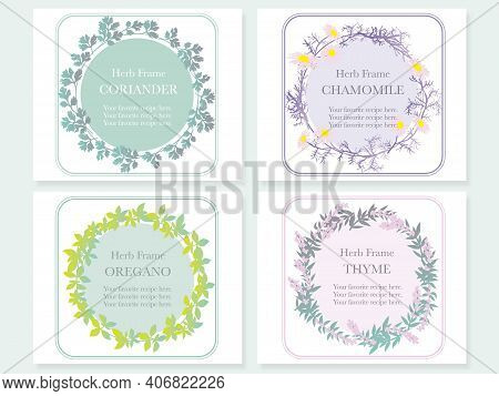 Set Of Four Frames With Various Herbs: Coriander, Chamomile, Oregano, And Thyme. Vector Illustration