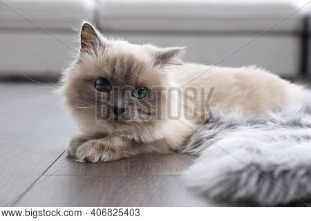 Beautiful Fluffy Cat Lying On Warm Floor In Room. Heating System