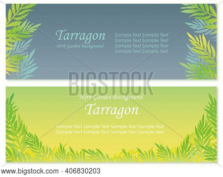 Set Of Vector Background Illustrations With Tarragon Isolated On A White Background.