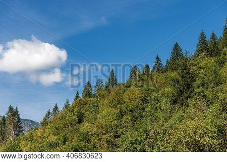 Closeup Of A Green Forest In Summer With Evergreen And Deciduous Trees On Blue Sky With Clouds. Alps