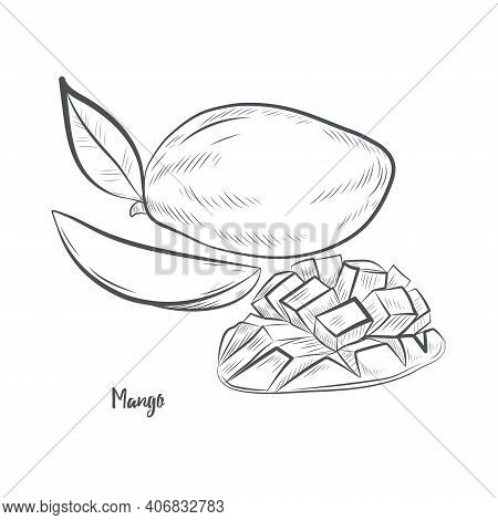Mango Fruit Sketch Vector Illustration.hand Drawn Mango Sketch Isolated On White Background.