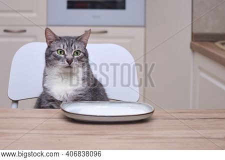 The Cat Looks At The Saucer Of Milk In The Kitchen. Pet Has Dinner At The Home Table In The Kitchen