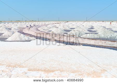 Salt Collecting In Salt Farm, India
