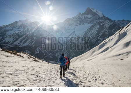 Trekker Walking On The Snowfield With Machhapuchhre Mountain (mt.fish Tail) The Holy Mountains In Th