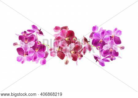 Beautiful Purple Orchid Flower Isolated On White Background With Clipping Path. Flower Arrangement.