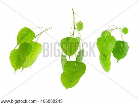 Green Tropical Leaves Set Isolated On White Background Summer Design And Nature Environment Concept.