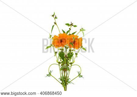 Beautiful Yellow Flower Tree On White Background,with Clipping Path.