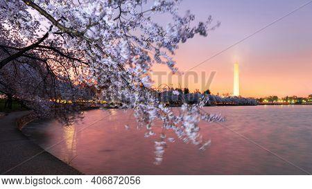 Washington DC; USA at the tidal basin with Washington Monument in spring season.