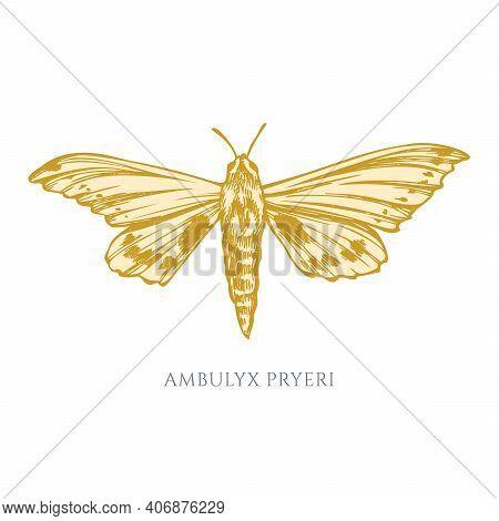 Vector Set Of Hand Drawn Pastel Ambulyx Moth Stock Illustration