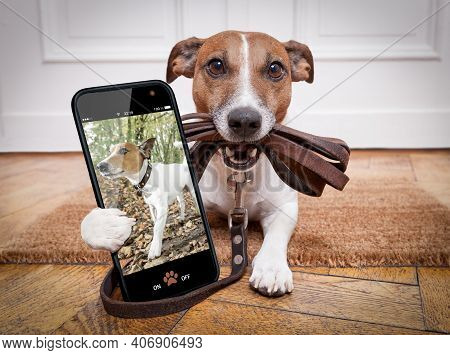 Dog With Leather Leash Waiting To Go Walkies With Owner Outdoors, Making A Selfie