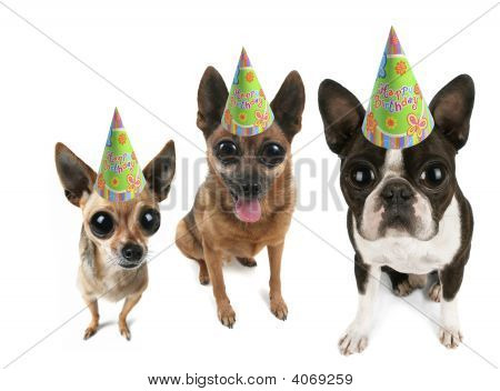 Big Eyed Party Dogs