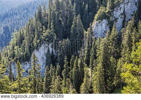 Big Rocks And Coniferous Forest, Low Tatras Mountains, Slovak Republic. Hiking Theme. Seasonal Natur