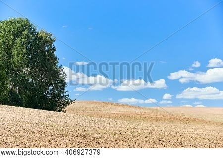 Ploughed Arable Plowing Agricultural Land Plowed For Crops With Birch Trees Under Blue Sky With Clou