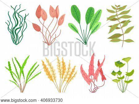 Cute Cartoon Aquarium Seaweeds Set. Flat Style Illustrations For Children. Collection Of Underwater