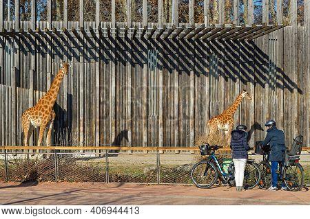 Lyon, France, November 27, 2020 : A The Zoo In Parc De La Tete D'or. The Park Is One Of The Larger C