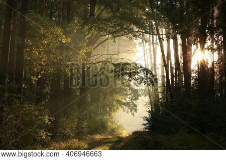 Road path autumn forest Nature trees landscape sunrise Nature landscape landscape Nature background woods Nature landscape Nature background landscape Nature background Nature landscape Nature background landscape Nature landscape Nature background.