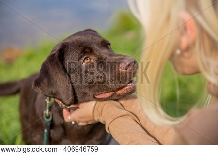 Dog Breed Labrador Retriever Looks Into The Eyes Of His Blonde Mistress On The Grass On A Sunny Day,