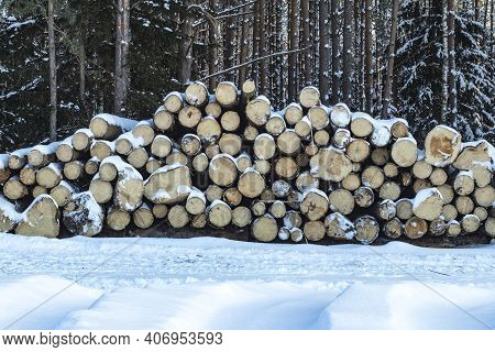 Street Lighting. White Snow. Harvesting Of The Winter Forest. They Are Stored Before Transportation.
