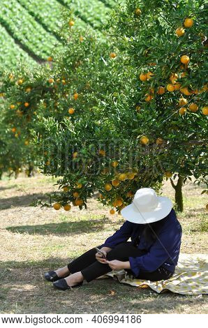 Orange Or Orange Farm, Orange Tree Or Orange Plant And Woman