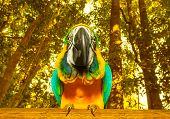 Photo of South Africa beautiful bird, big colorful macaw parrot in the forest, funny yellow parakeet with blue wings in the zoo, african tropical nature, wild animal, ara portrait, wildlife concept poster