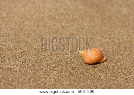 Seashell On The Sand