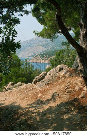 Coastline With Pine Trees