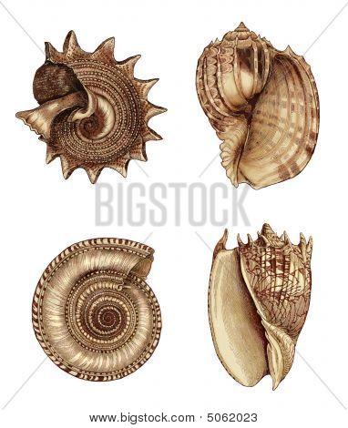 Shell Assortment 1