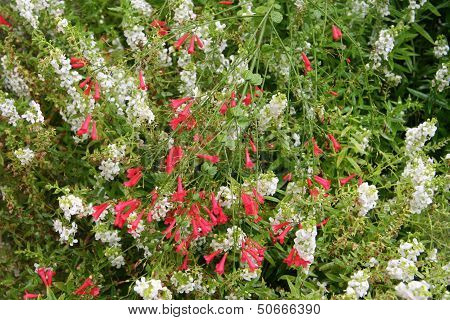 Red wnd whit flowers