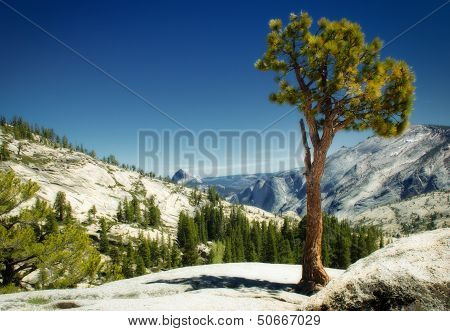Yosemite National Park, Olmsted Point near Tioga Pass Road, California