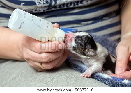 Puppy Fed Of Baby Bottle
