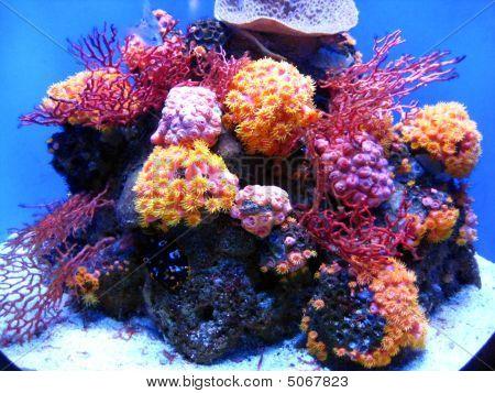 Fluro Coral