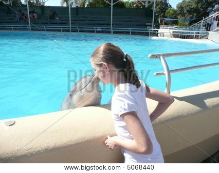 Dolphin Kissing Young Girl On Cheek At Coffs Harbour Porpoise Pool Nsw Australia