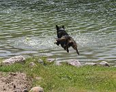 Dog jumping into a lake to fetch a ball poster