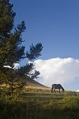 A beautiful horse on a green field with a bright blue sky and pine tree. poster