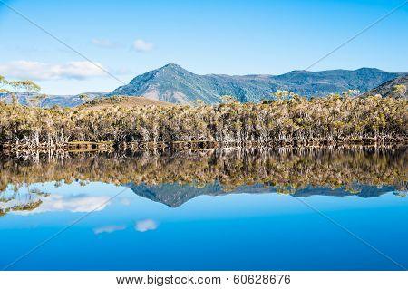 Mt Rallinga-Melaleuca
