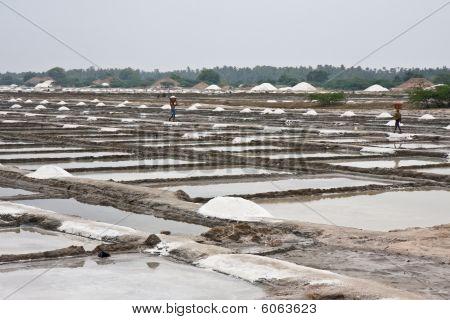 Saline In India