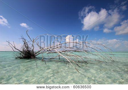 Uprooted Tree On Coast
