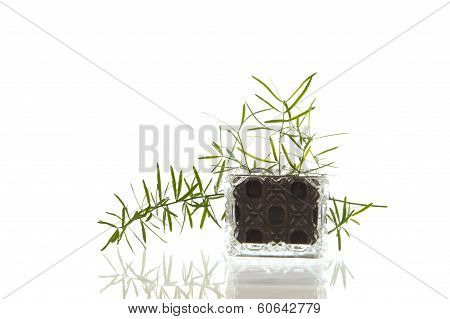Crystal glass flask with plant