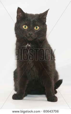 Black Cat With Yellow Eyes Sits Wearily Looking