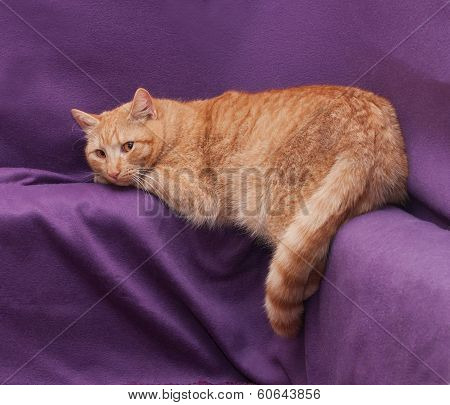 Red Fluffy Cat Lying, Omitting One Hind Paw