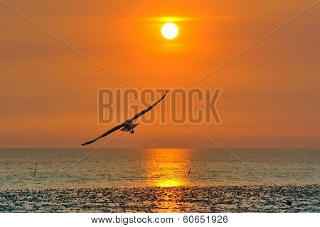 Seagull During Sunset