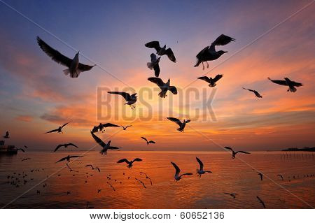 Flock Of Seagulls Are Dancing With Twilight