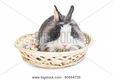 poster of Fluffy rabbit in basket with Easter eggs isolated on white
